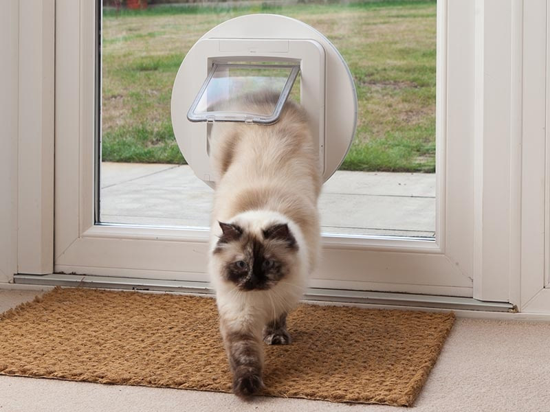 cat flap for double glazed glass