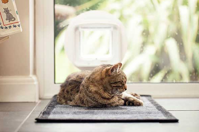 Infrared collar key cat flap