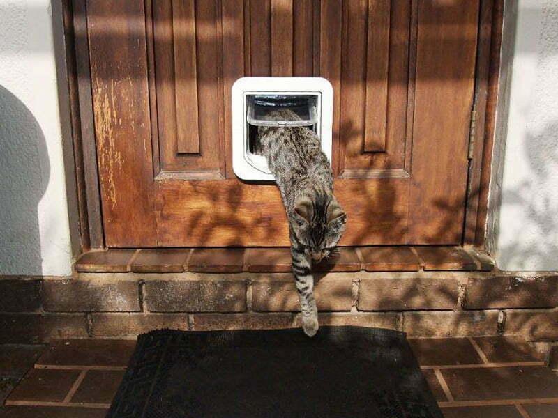 cat flaps for windows